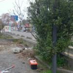秋葉区庭木伐採前1