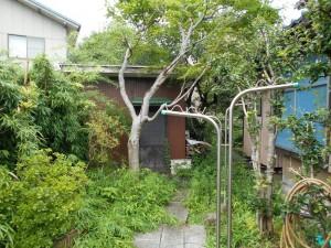 枝葉が伸びた庭