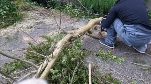 一軒家で庭木伐採3