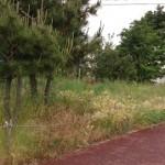 東区草刈り作業前1