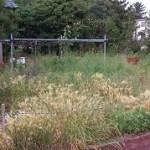 東区草刈り作業前2