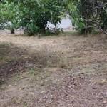 東区草刈り作業後3