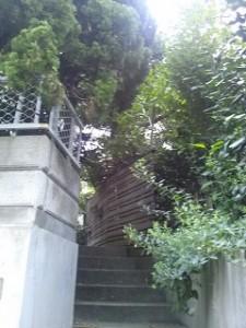 入口階段を覆う樹木