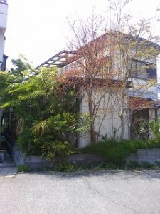 家周りの伸びた枝葉